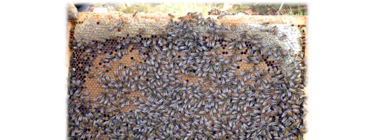 12-Month Beekeeping